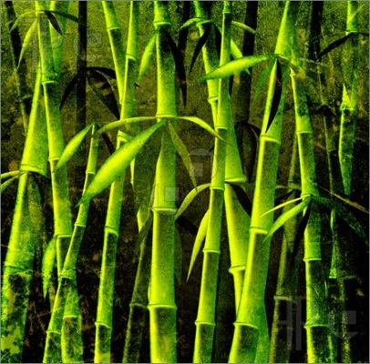bamboo sap
